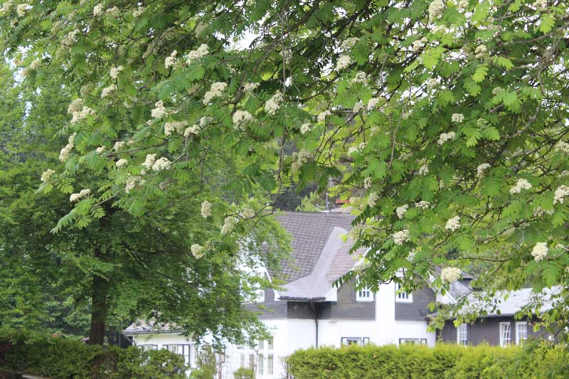 buitenaanzicht-zijaanzicht-Haus-am-Walde-skiverhuur-in-het-groen